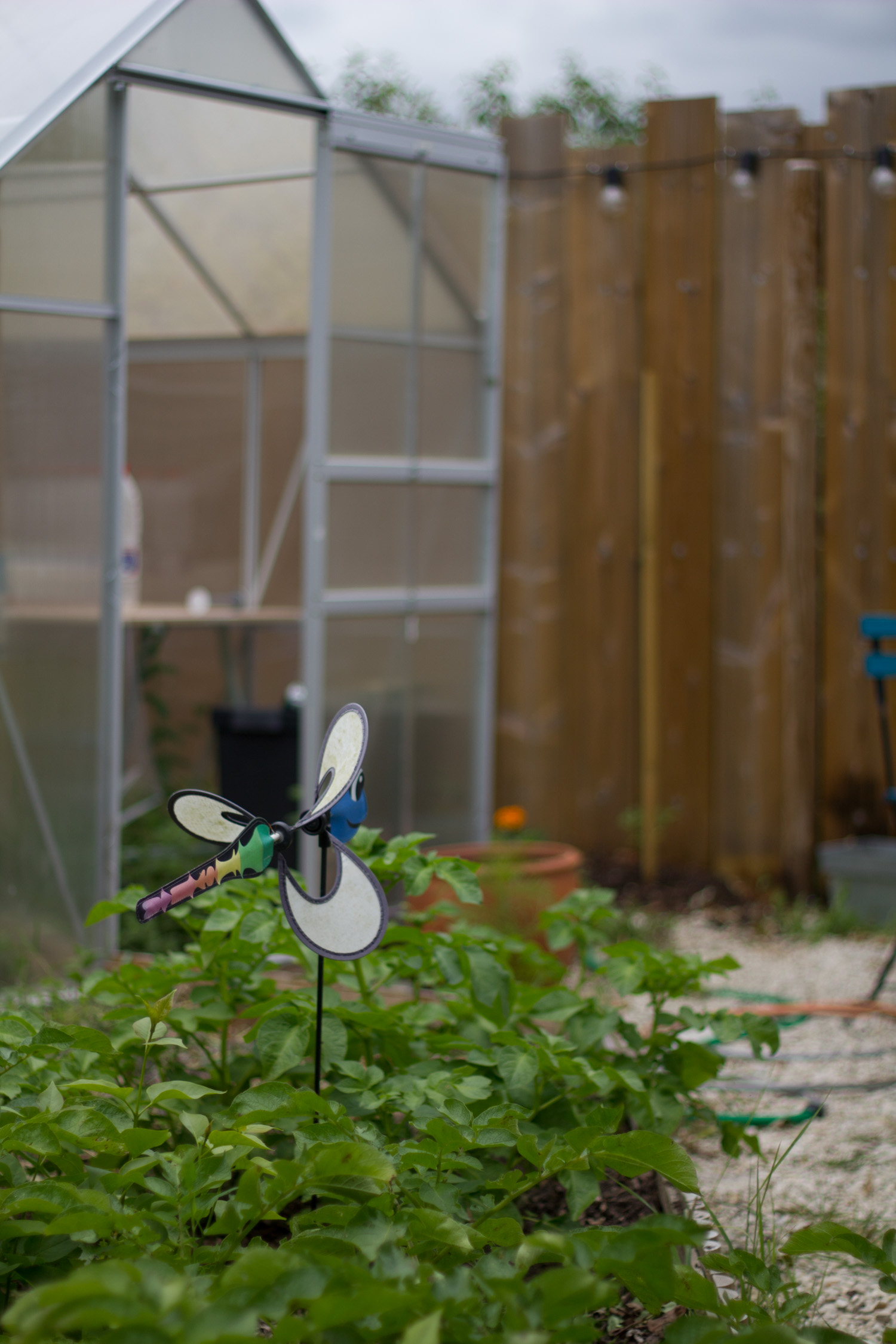 Eolienne déco libellule devant la serre
