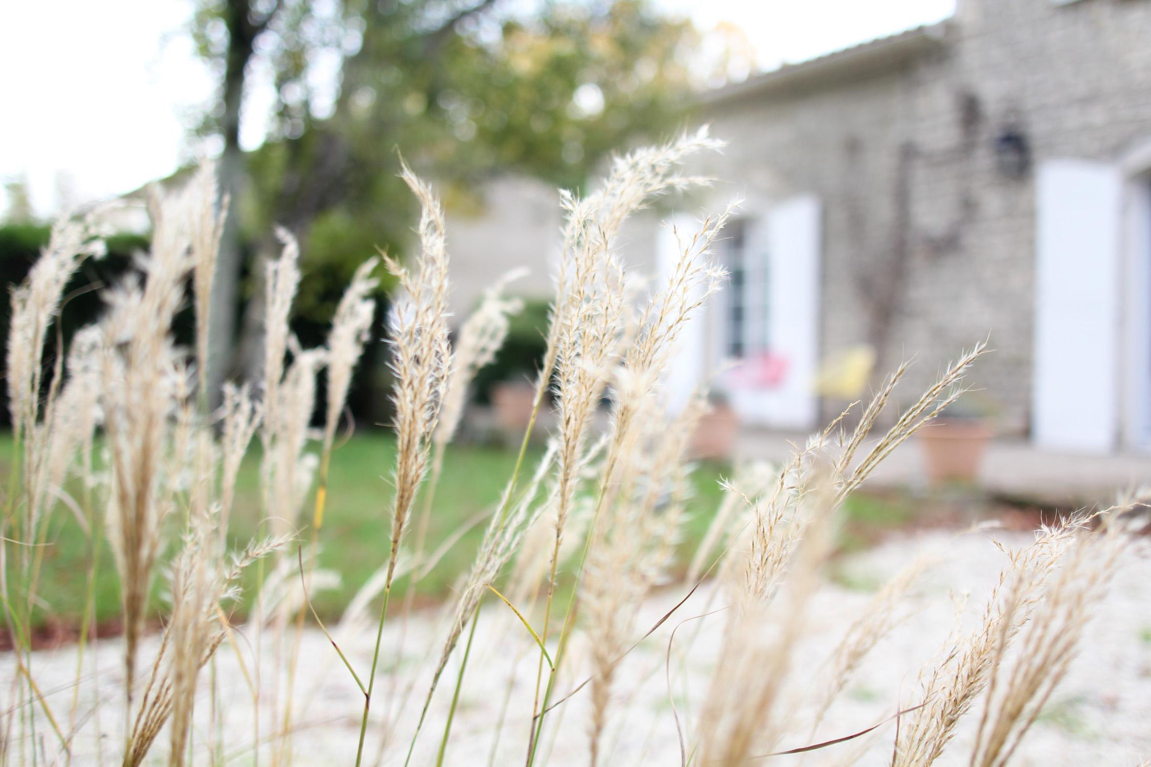 Plantation de graminées dans le jardin