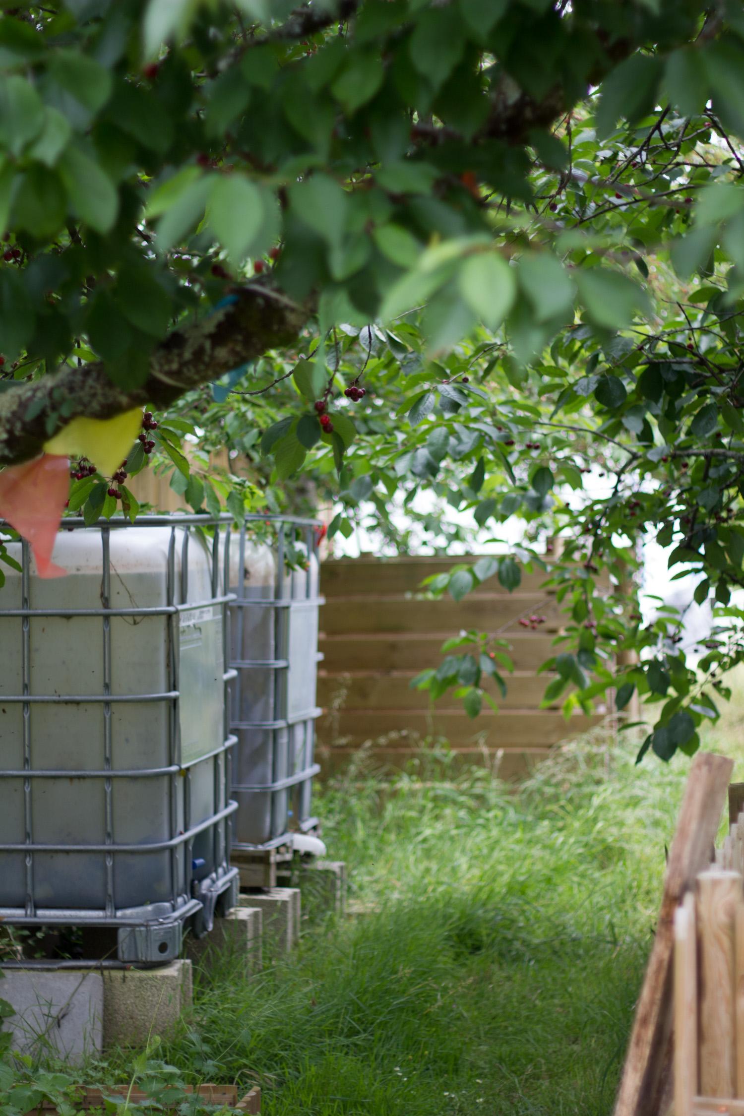 Partie technique du jardin : récupérateur d'eau et compost