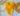 Foulard teinture jaune ice-dyed